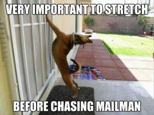 mailman-being-chased-by-dog-stretching-first