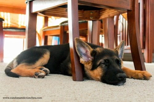 Bella 3.5 months