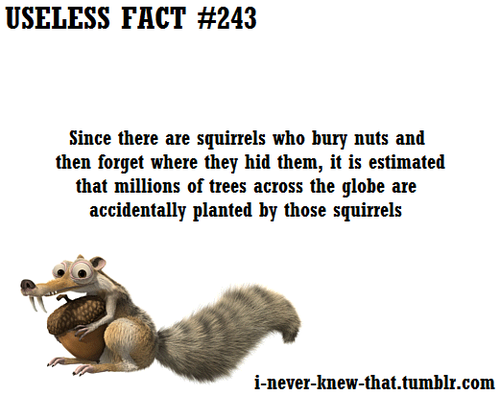 useless fact about nuts